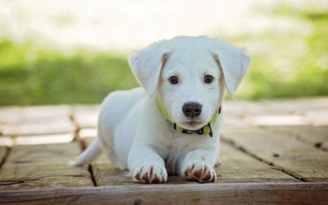 How to Protect Your Carpet When You Get a New Puppy